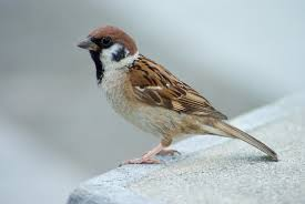 The Lost Sparrow